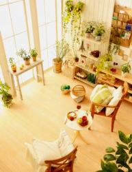 Plants in Living Area