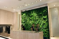 Vertical Garden design in an office setting 2