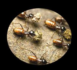 Termite Damage Signs and repairing tips