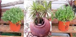 Use Waste Bins as Plant Container